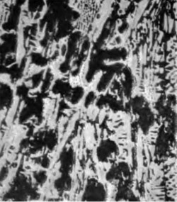 Microstructure of white iron.
